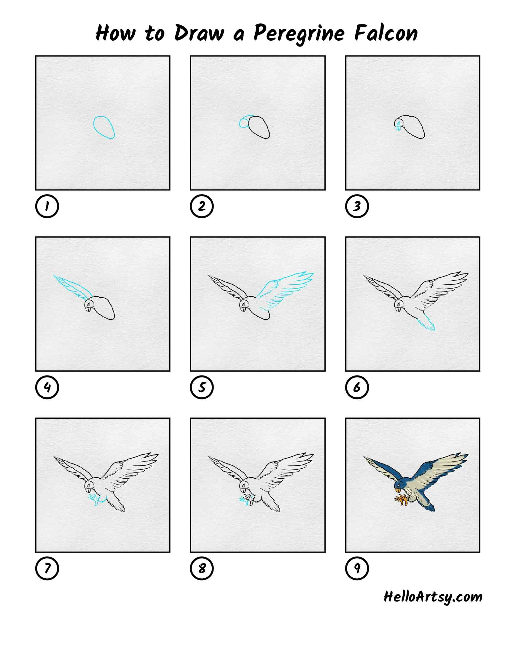 How To Draw Peregrine Falcon: All Steps