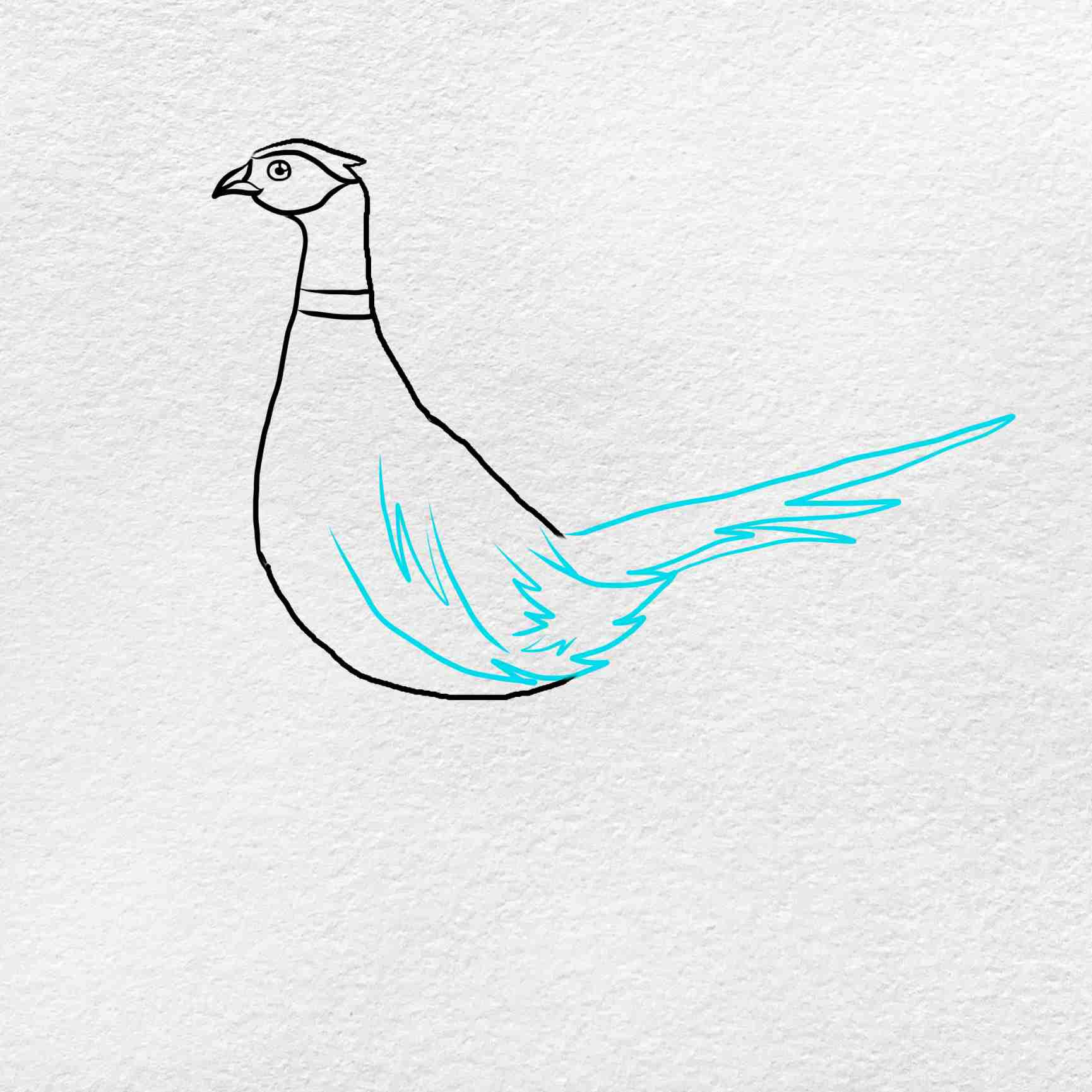 How To Draw Pheasant: Step 4