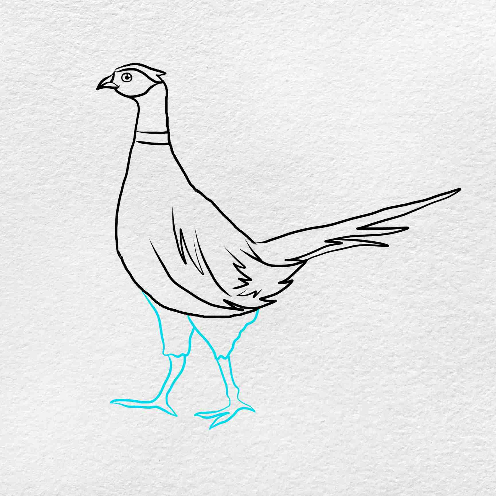 How To Draw Pheasant: Step 5