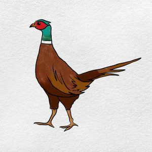 How To Draw Pheasant: Step 6