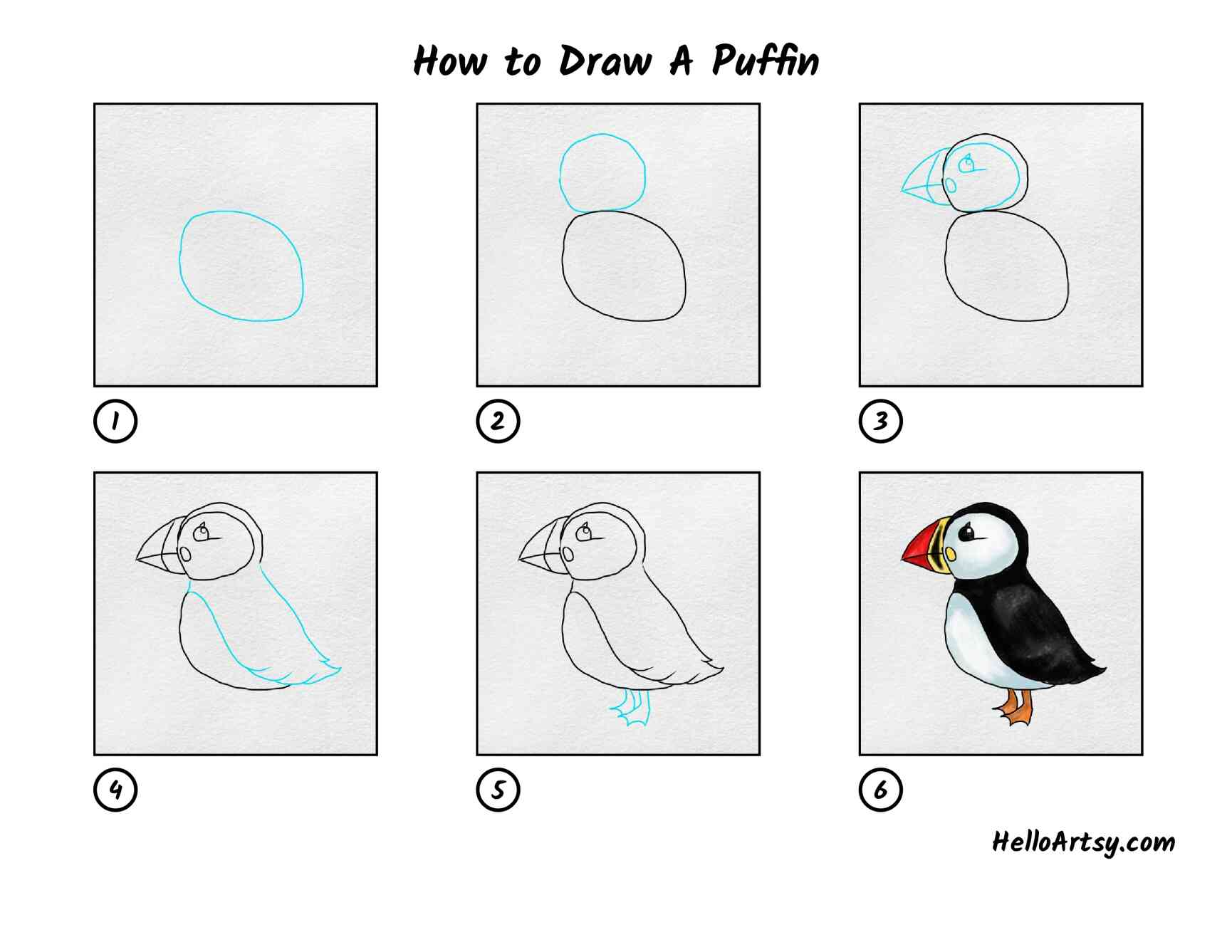 How To Draw Puffin: All Steps