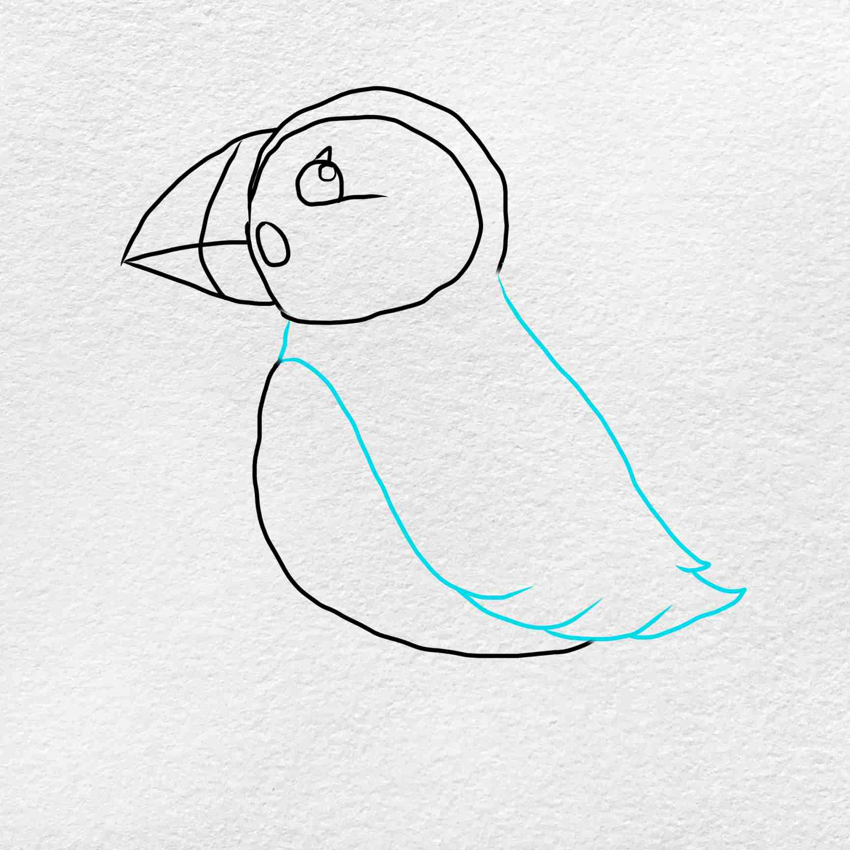 How To Draw Puffin: Step 4