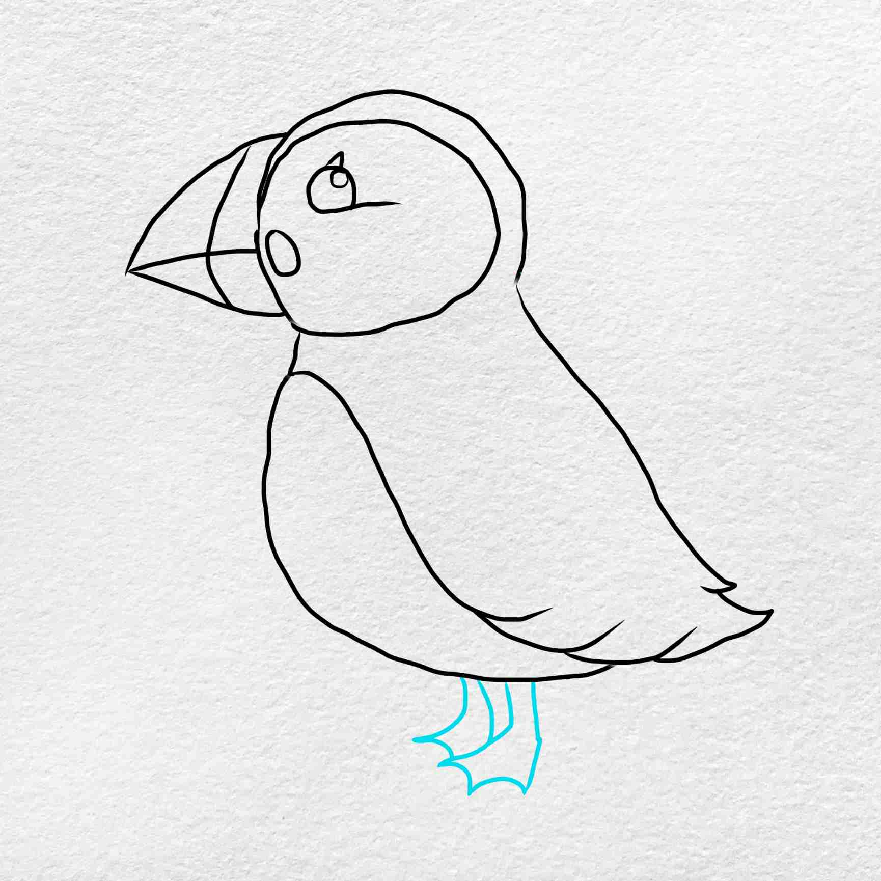 How To Draw Puffin: Step 5