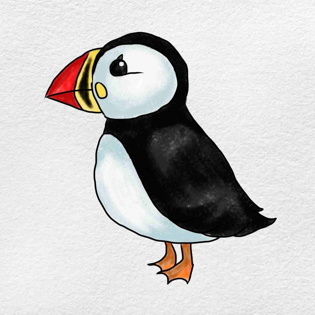 How To Draw Puffin: Step 6