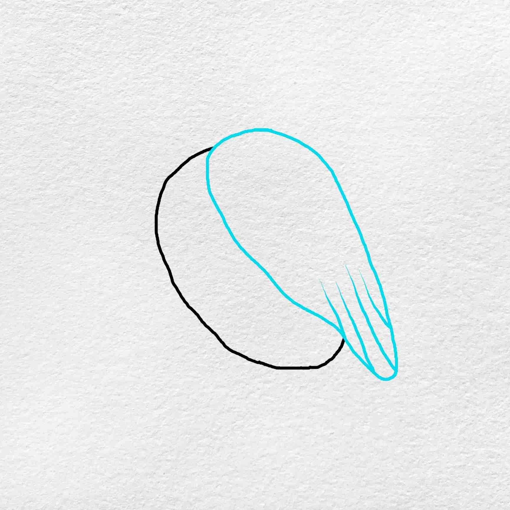 Snowy Owl Drawing: Step 2