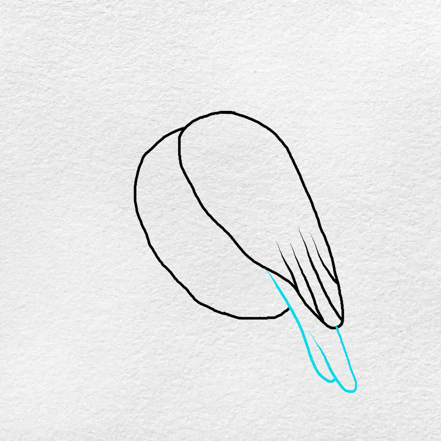 Snowy Owl Drawing: Step 3