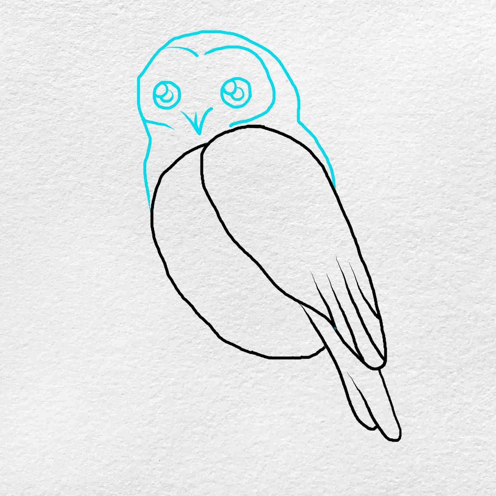 Snowy Owl Drawing: Step 4