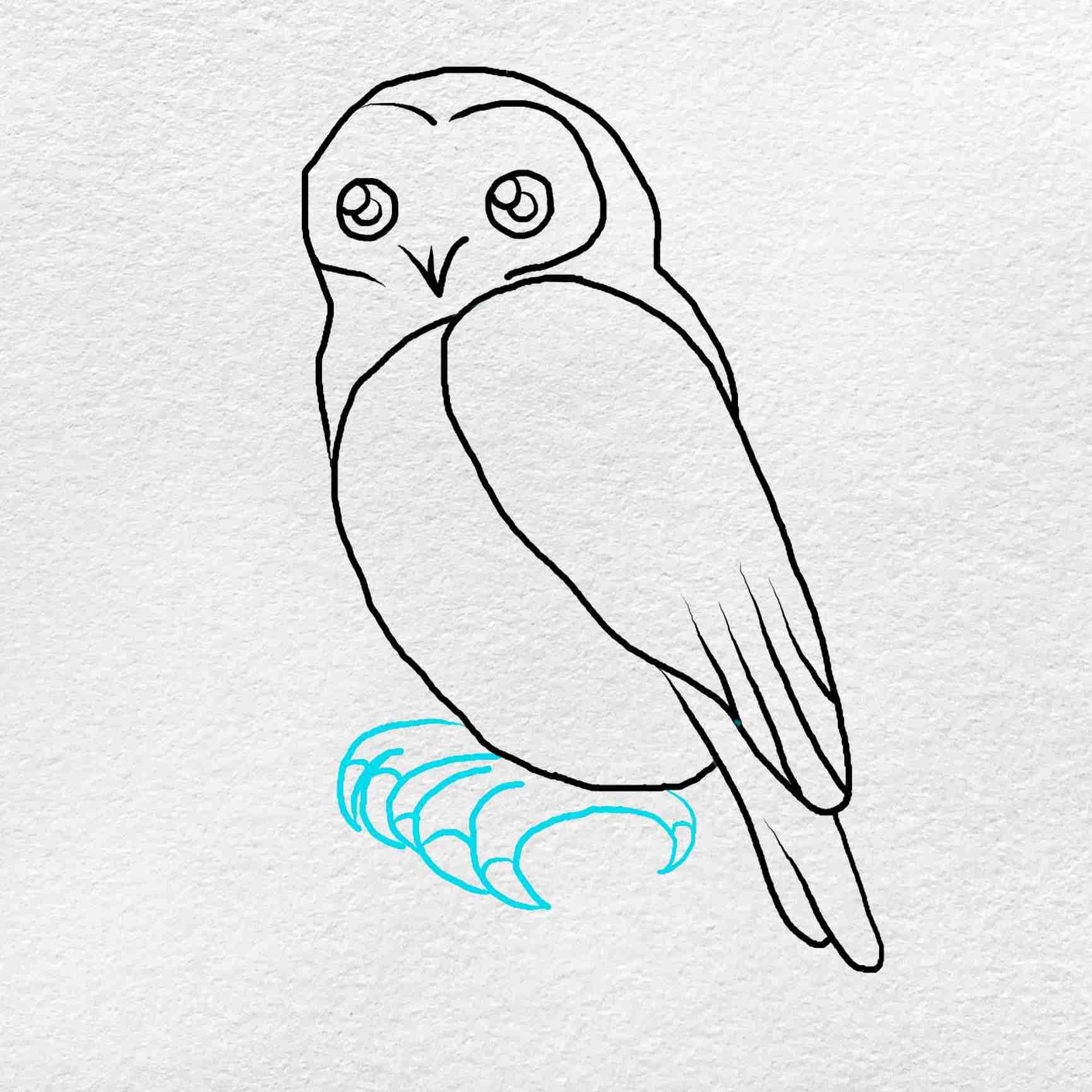 Snowy Owl Drawing: Step 5