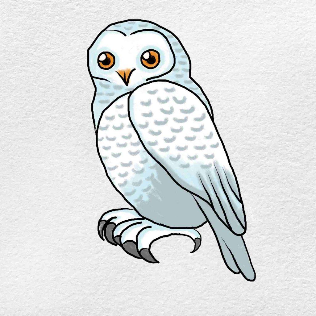 Snowy Owl Drawing: Step 6