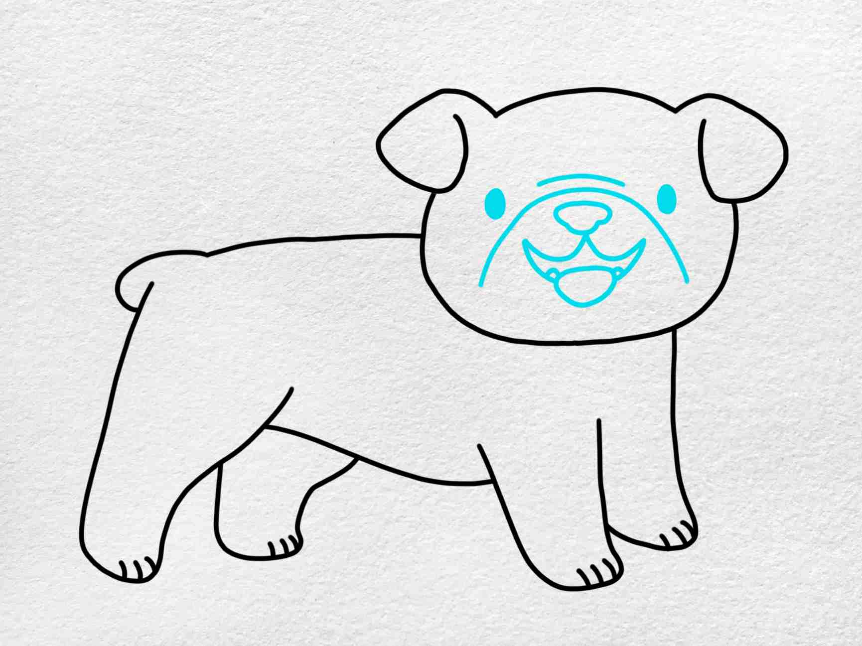 How To Draw A Bulldog: Step 5