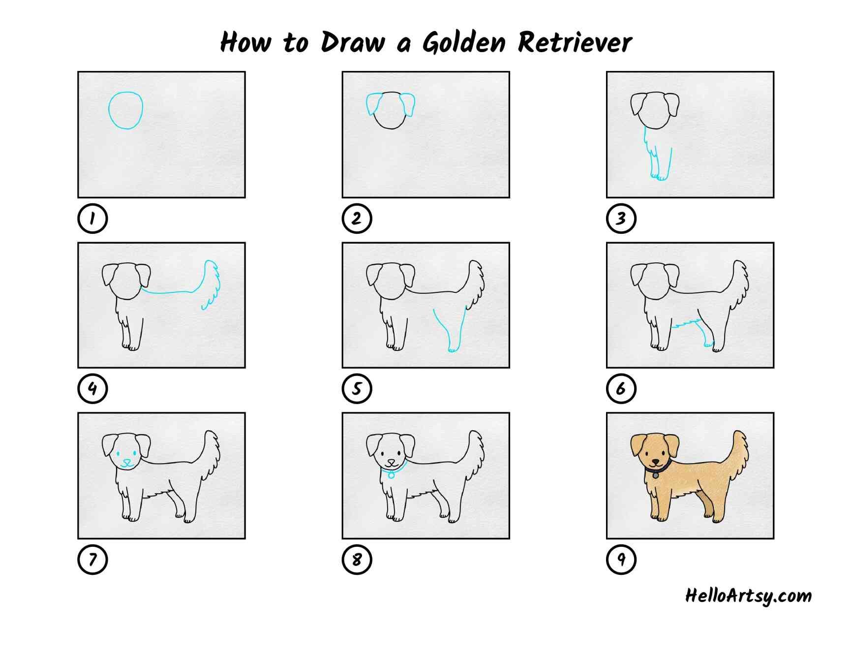 How To Draw A Golden Retriever: All Steps