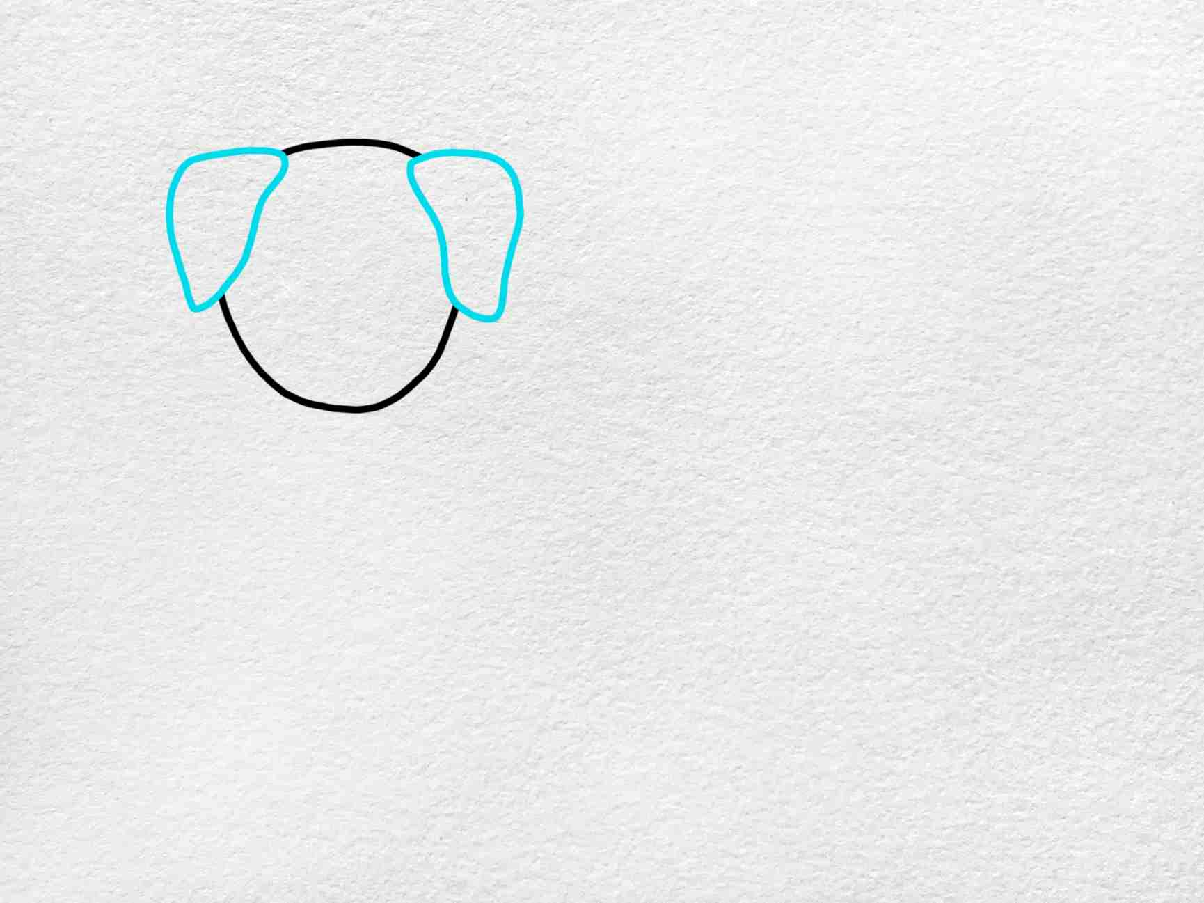 How To Draw A Golden Retriever: Step 2