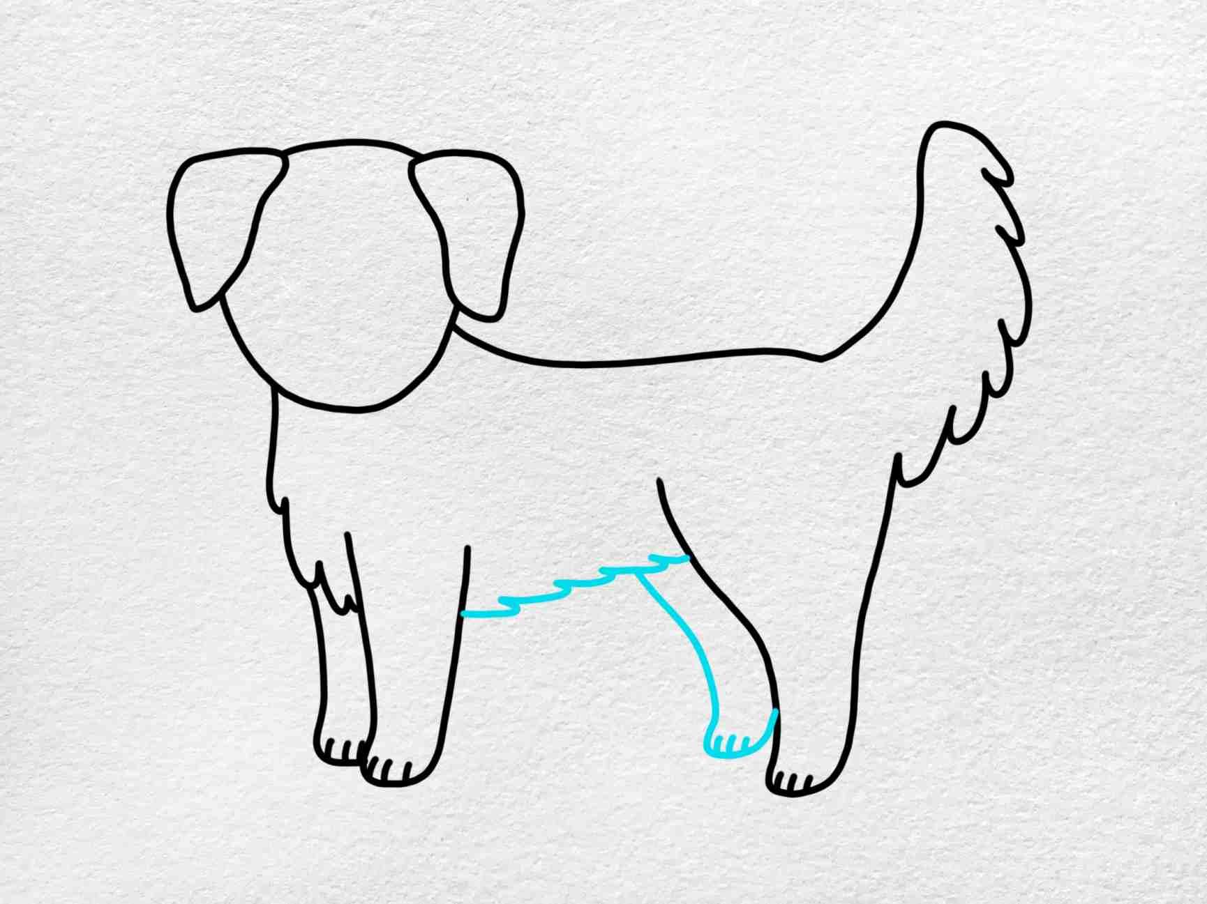How To Draw A Golden Retriever: Step 6