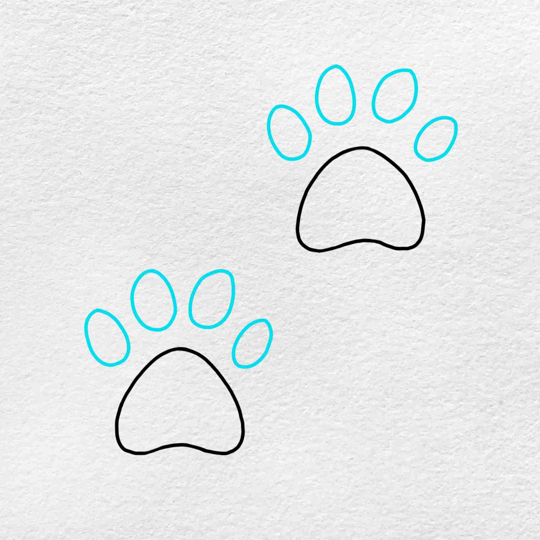 How To Draw A Paw Print: Step 5