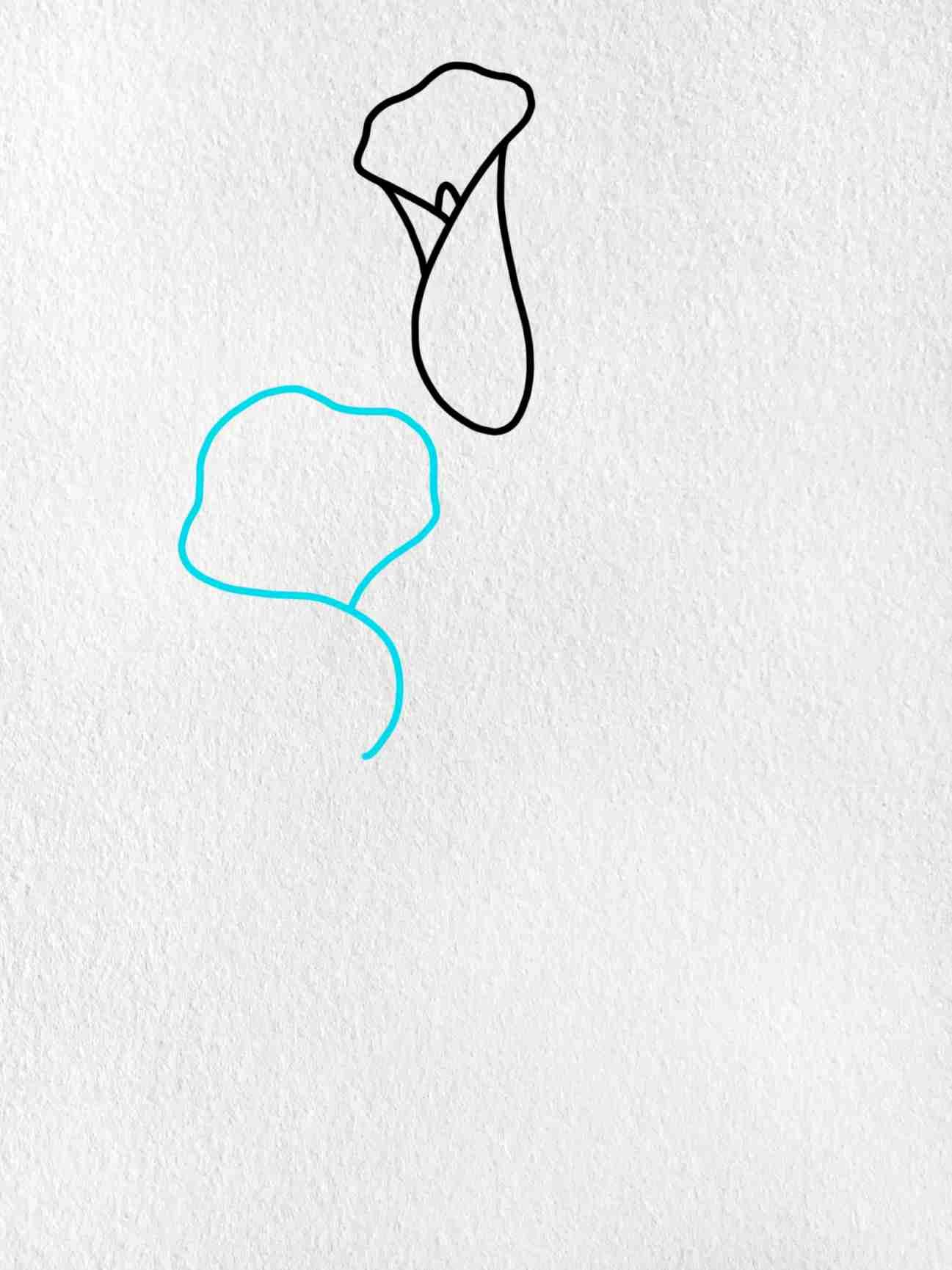 Calla Lily Drawing: Step 3
