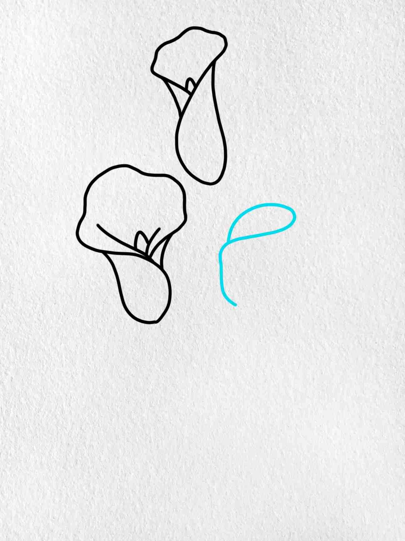 Calla Lily Drawing: Step 5