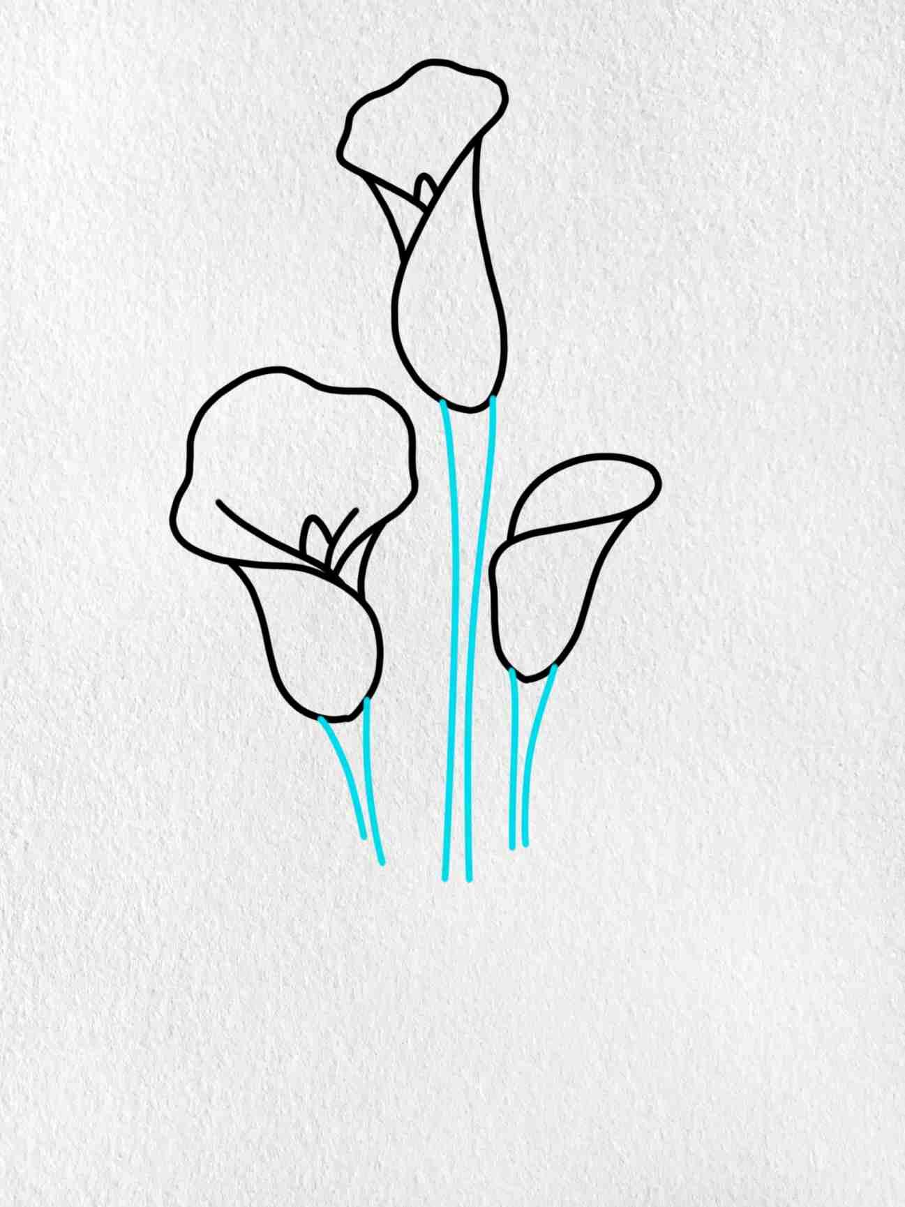 Calla Lily Drawing: Step 7