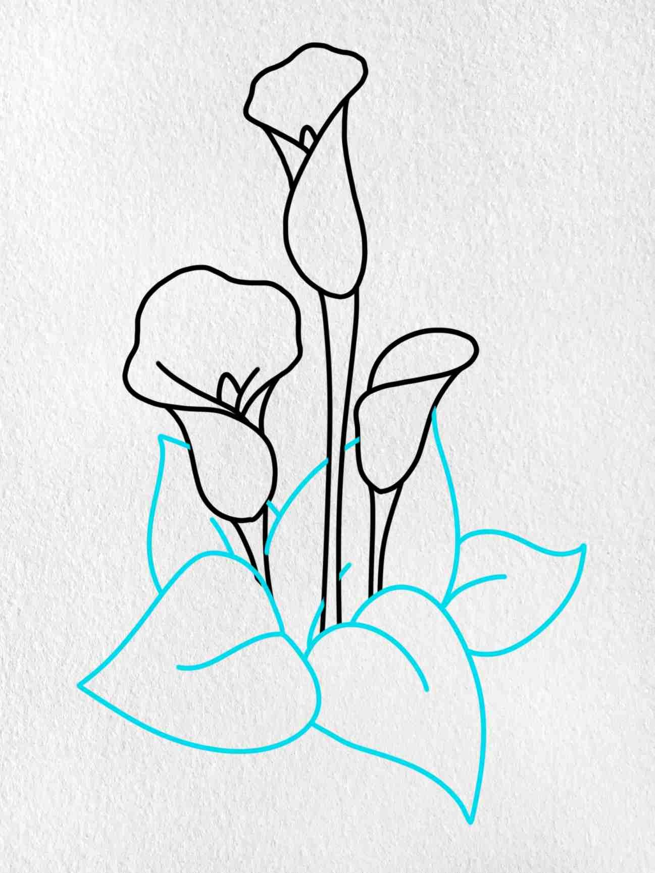 Calla Lily Drawing: Step 8