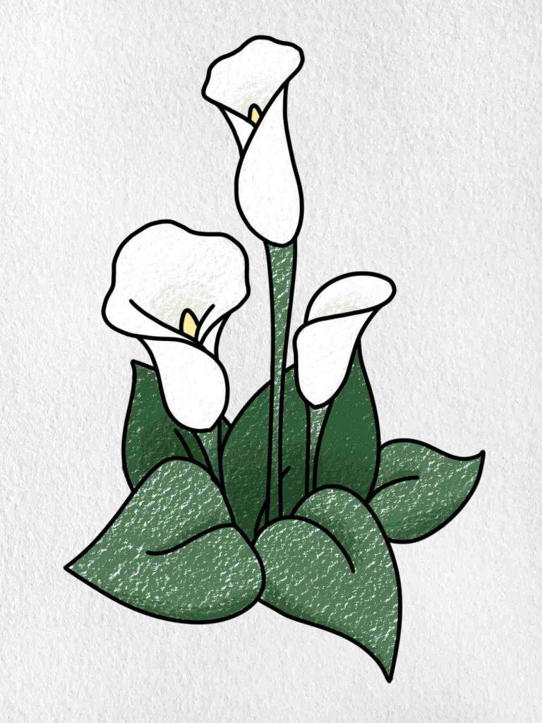 Calla Lily Drawing: Step 9