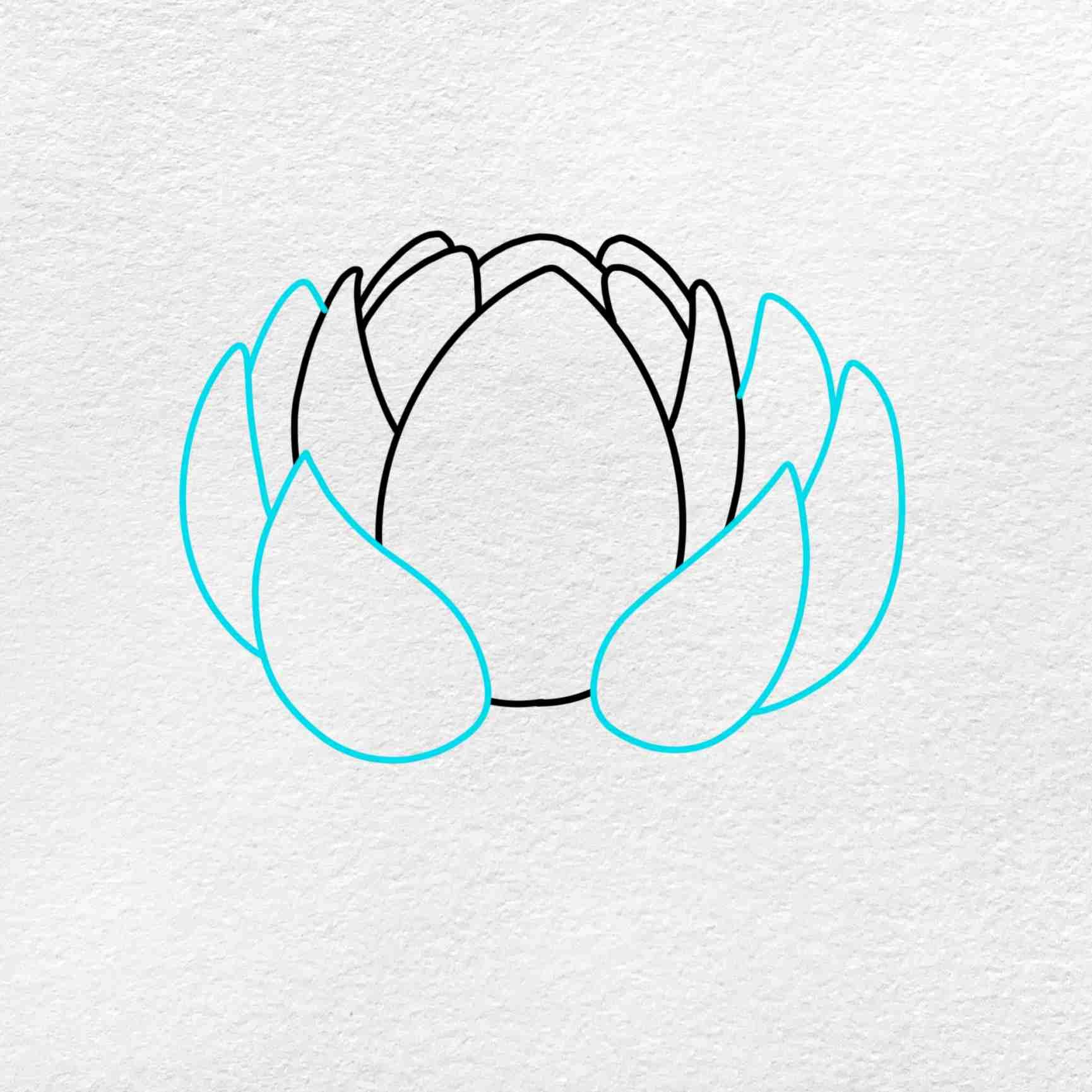 Easy Lotus Drawing: Step 3