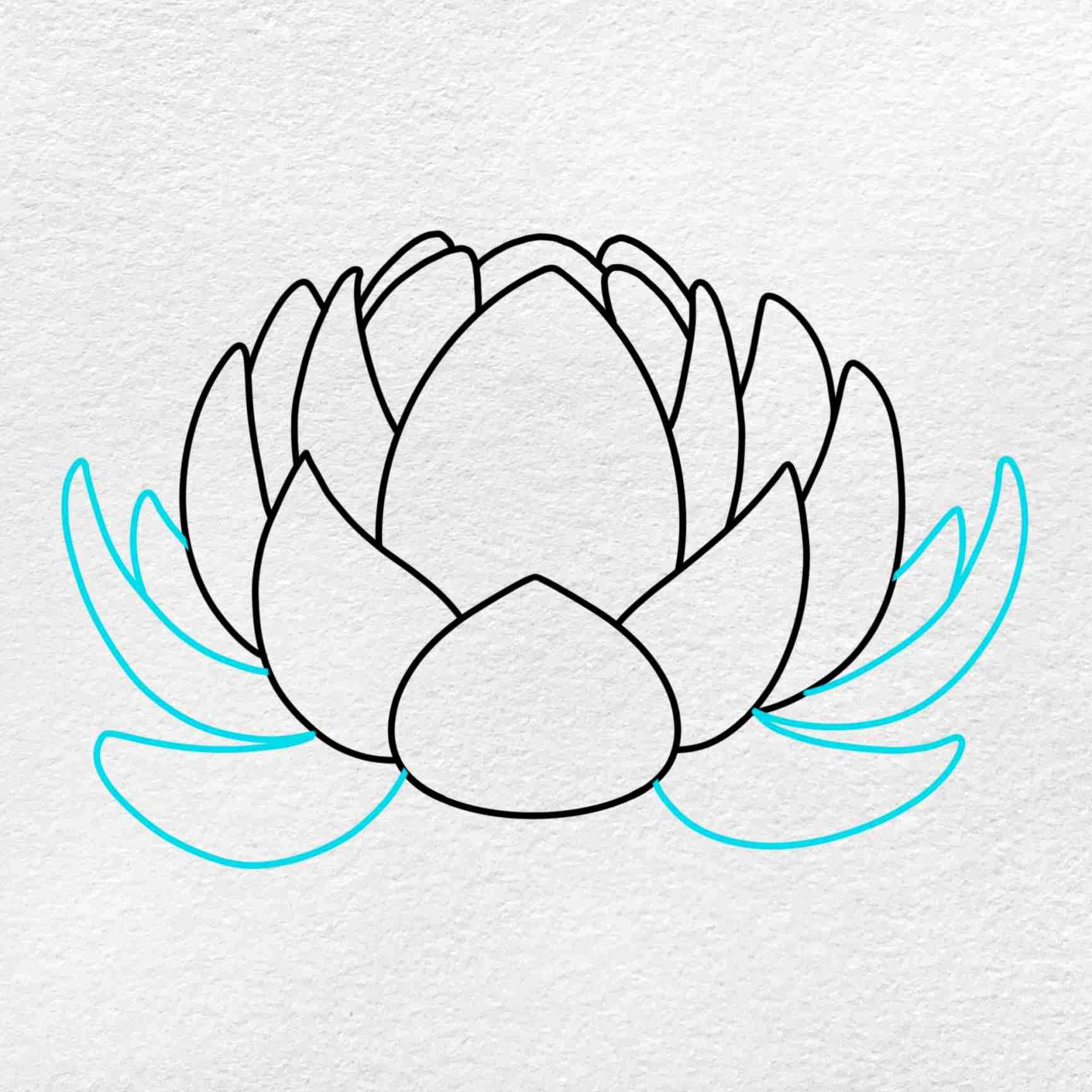 Easy Lotus Drawing: Step 5