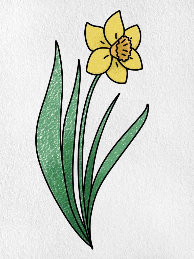 How To Draw A Daffodil: Step 6