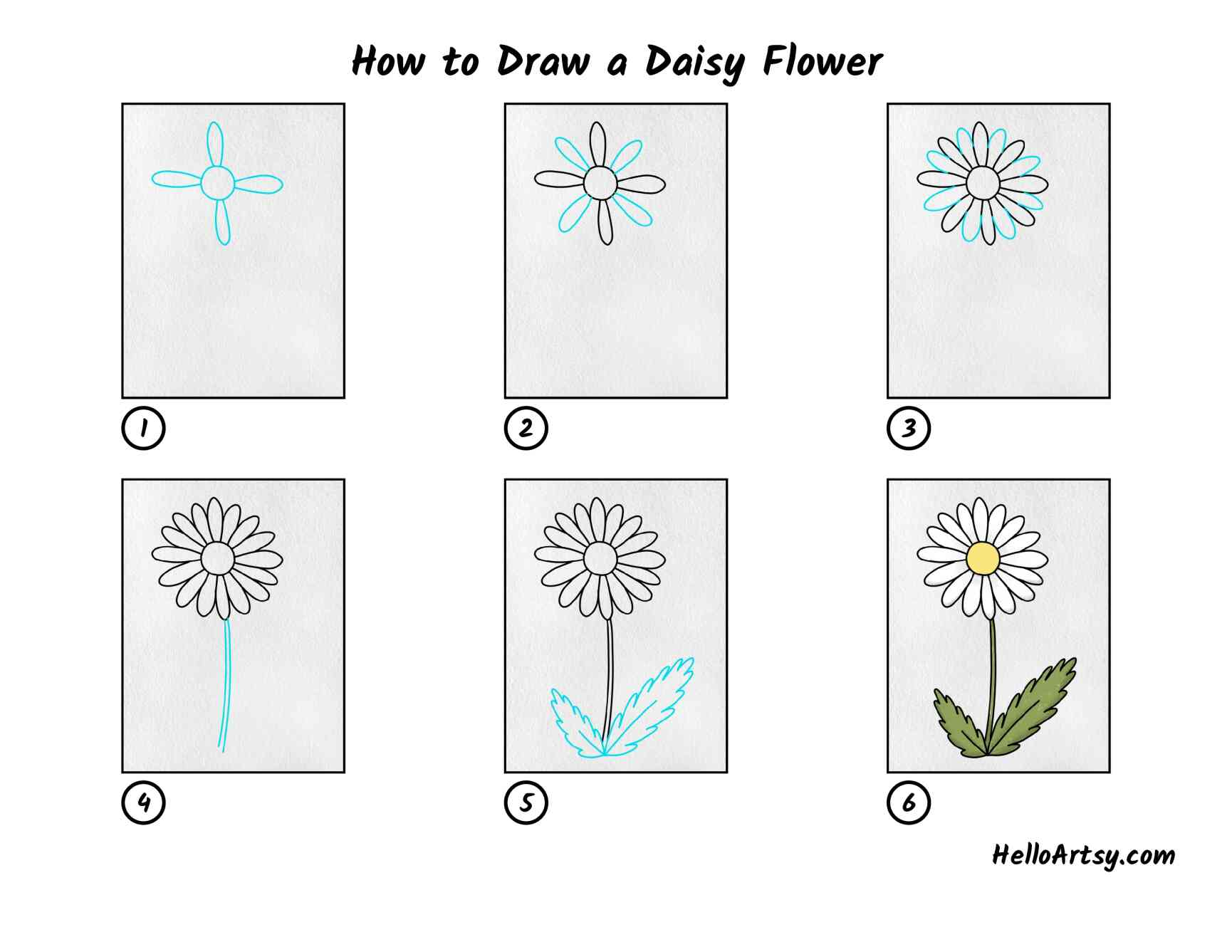 How To Draw A Daisy Flower: All Steps