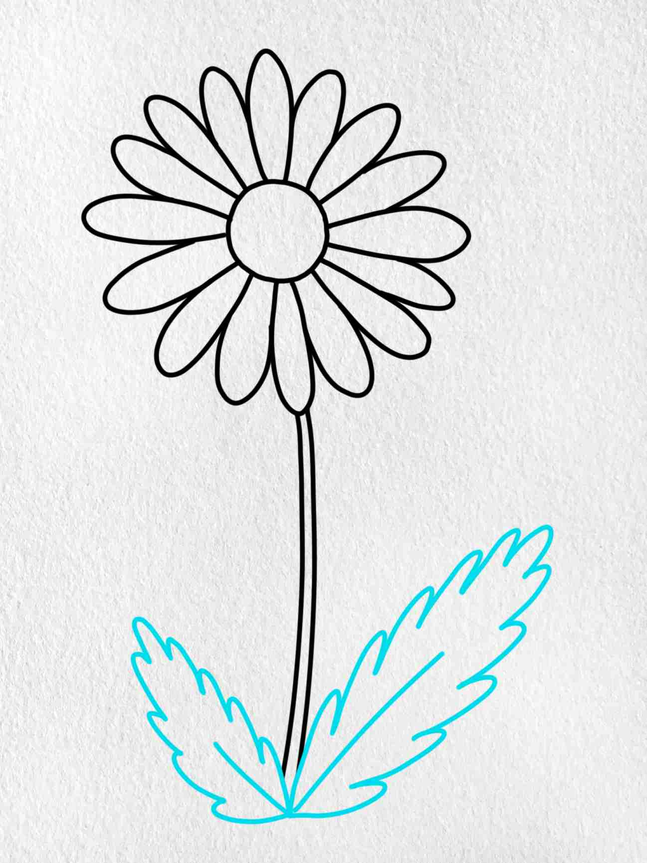 How To Draw A Daisy Flower: Step 5