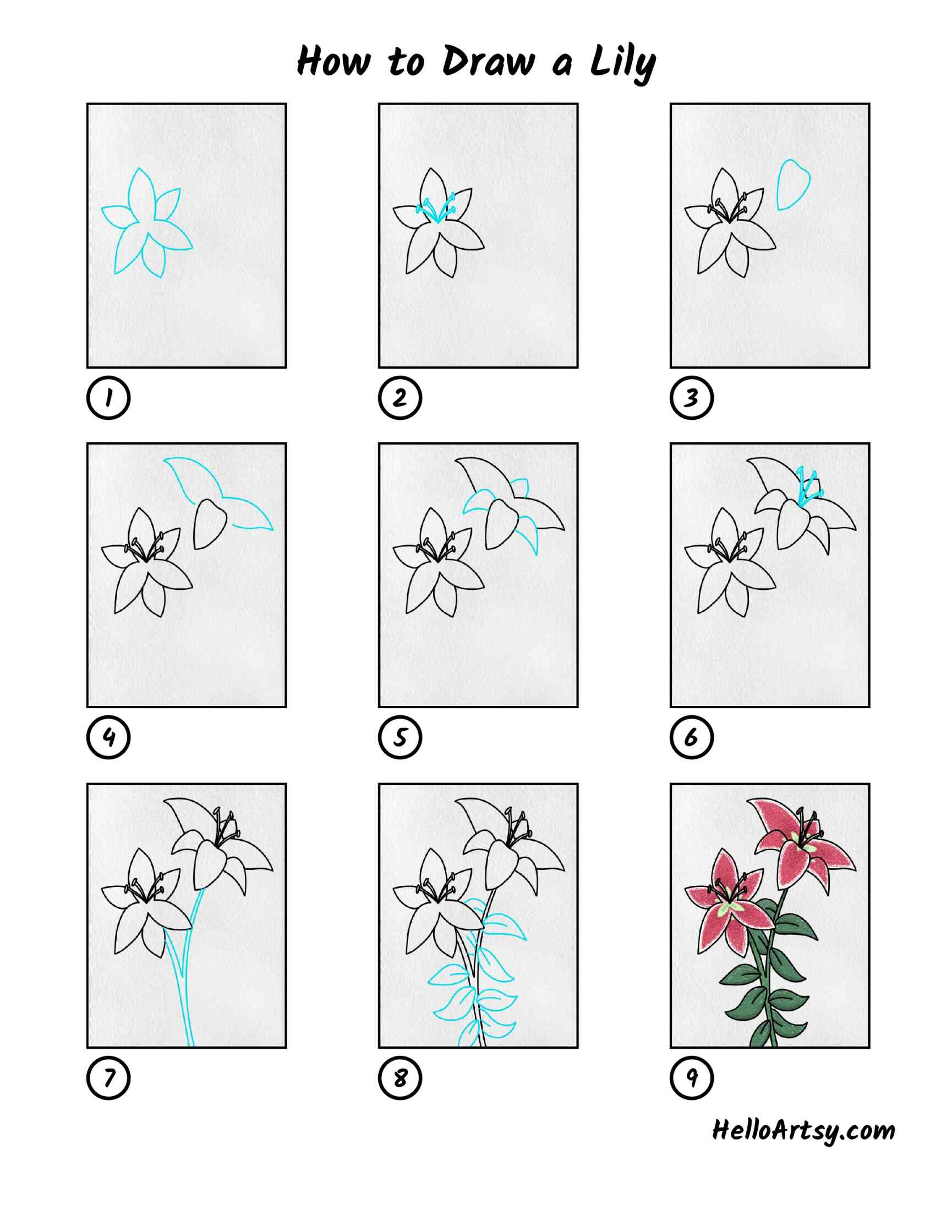 How To Draw A Lily: All Steps