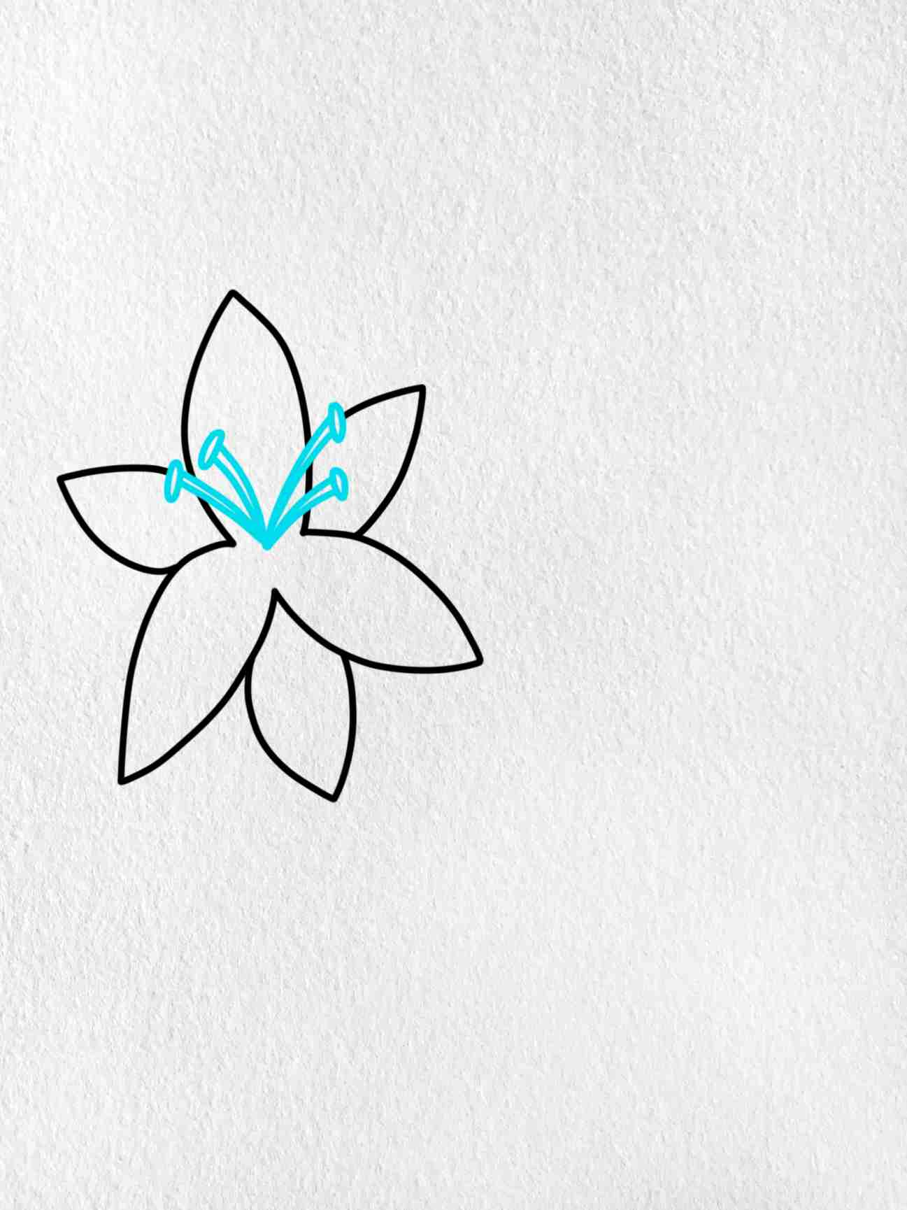 How To Draw A Lily: Step 2