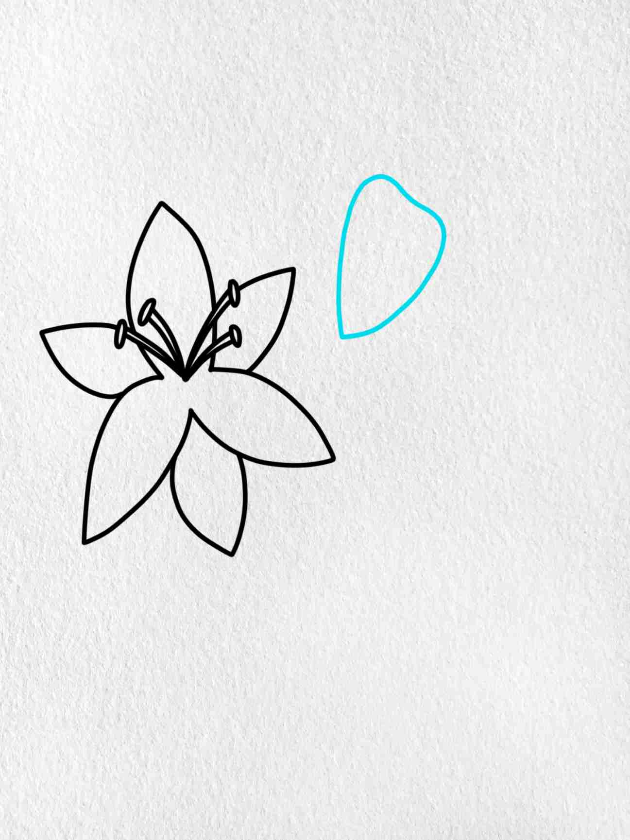 How To Draw A Lily: Step 3