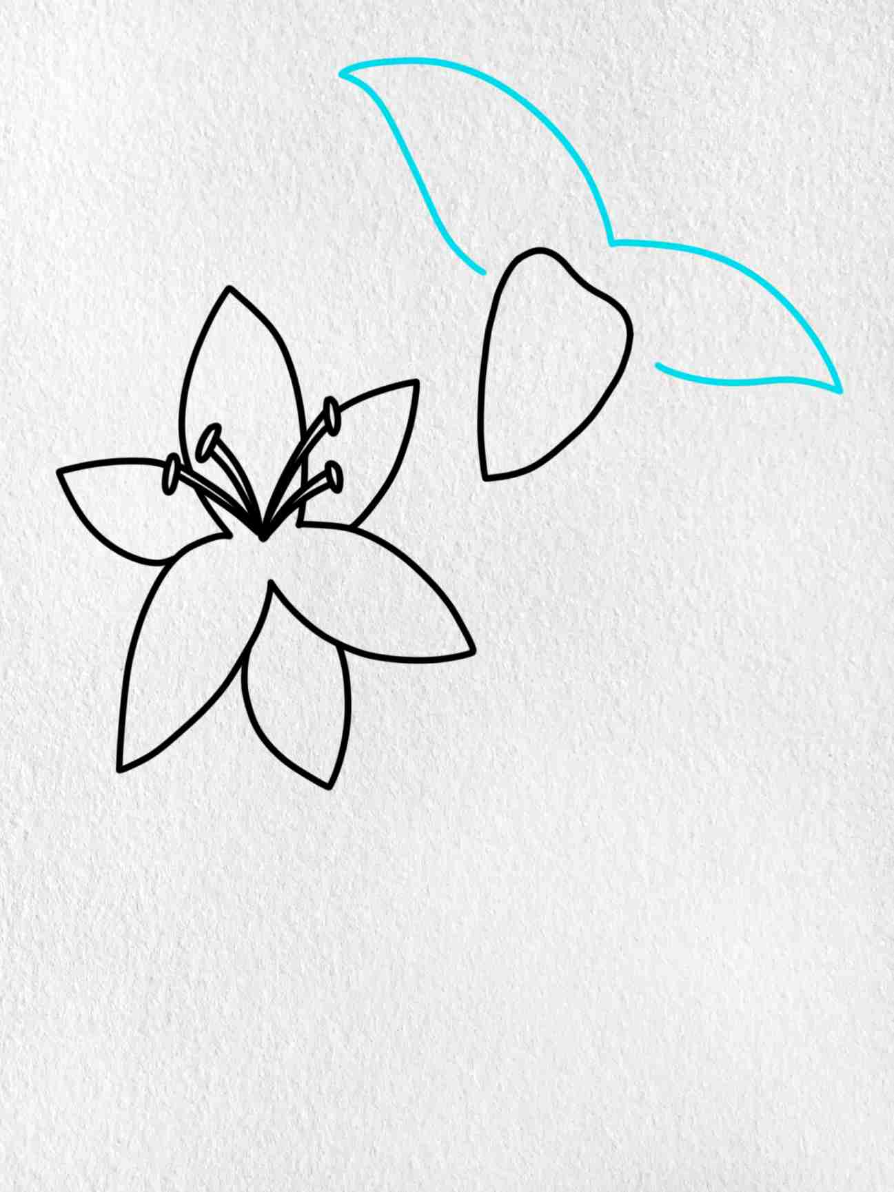 How To Draw A Lily: Step 4