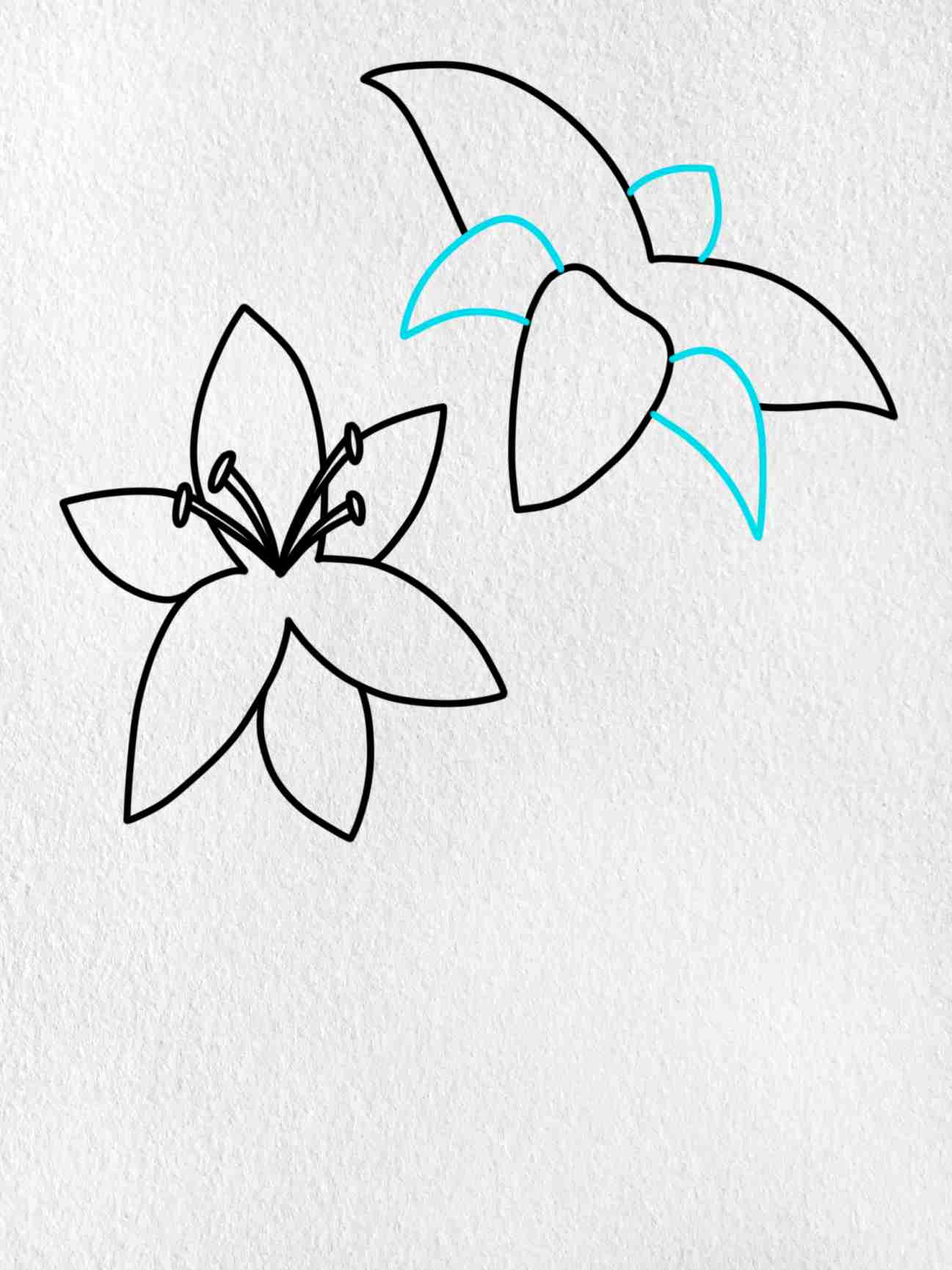 How To Draw A Lily: Step 5