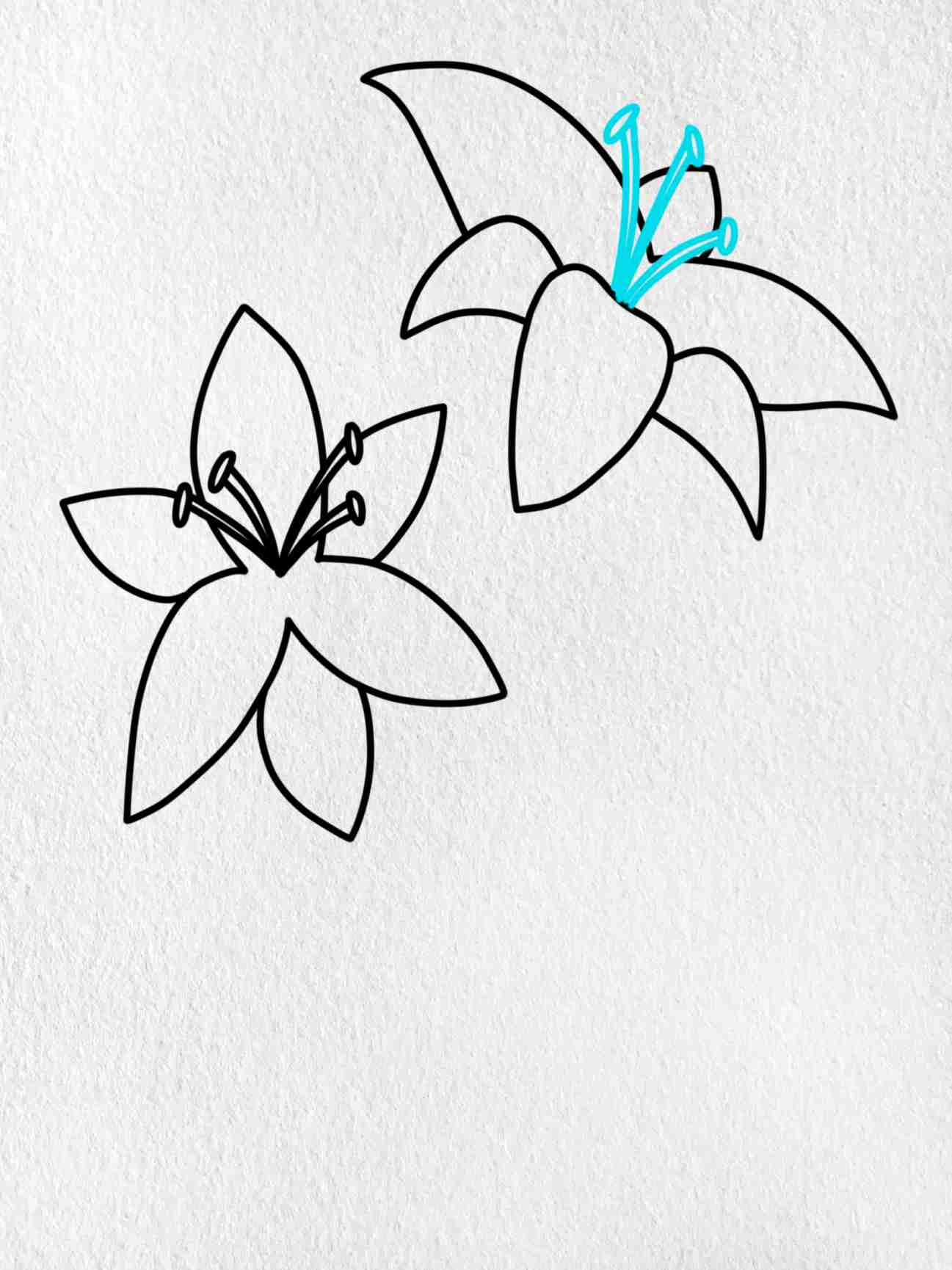 How To Draw A Lily: Step 6