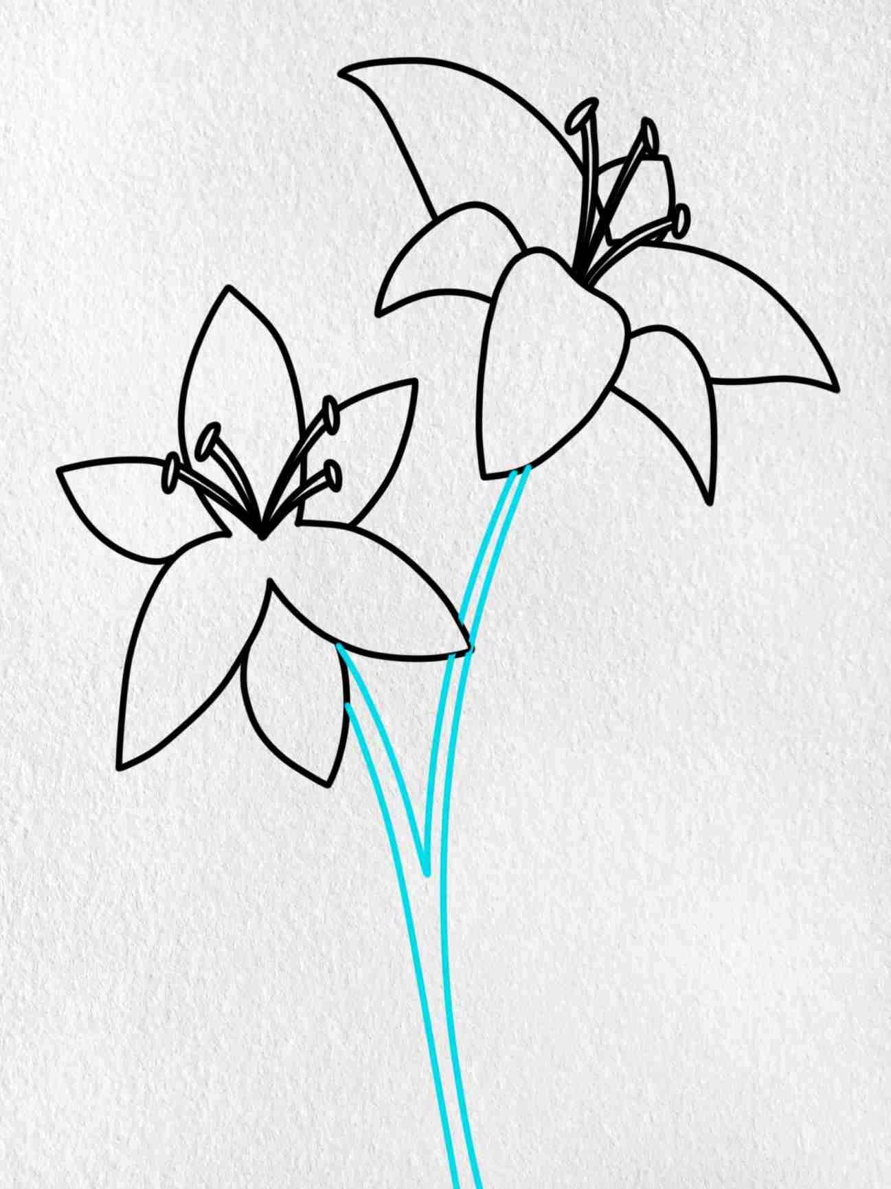 How To Draw A Lily: Step 7