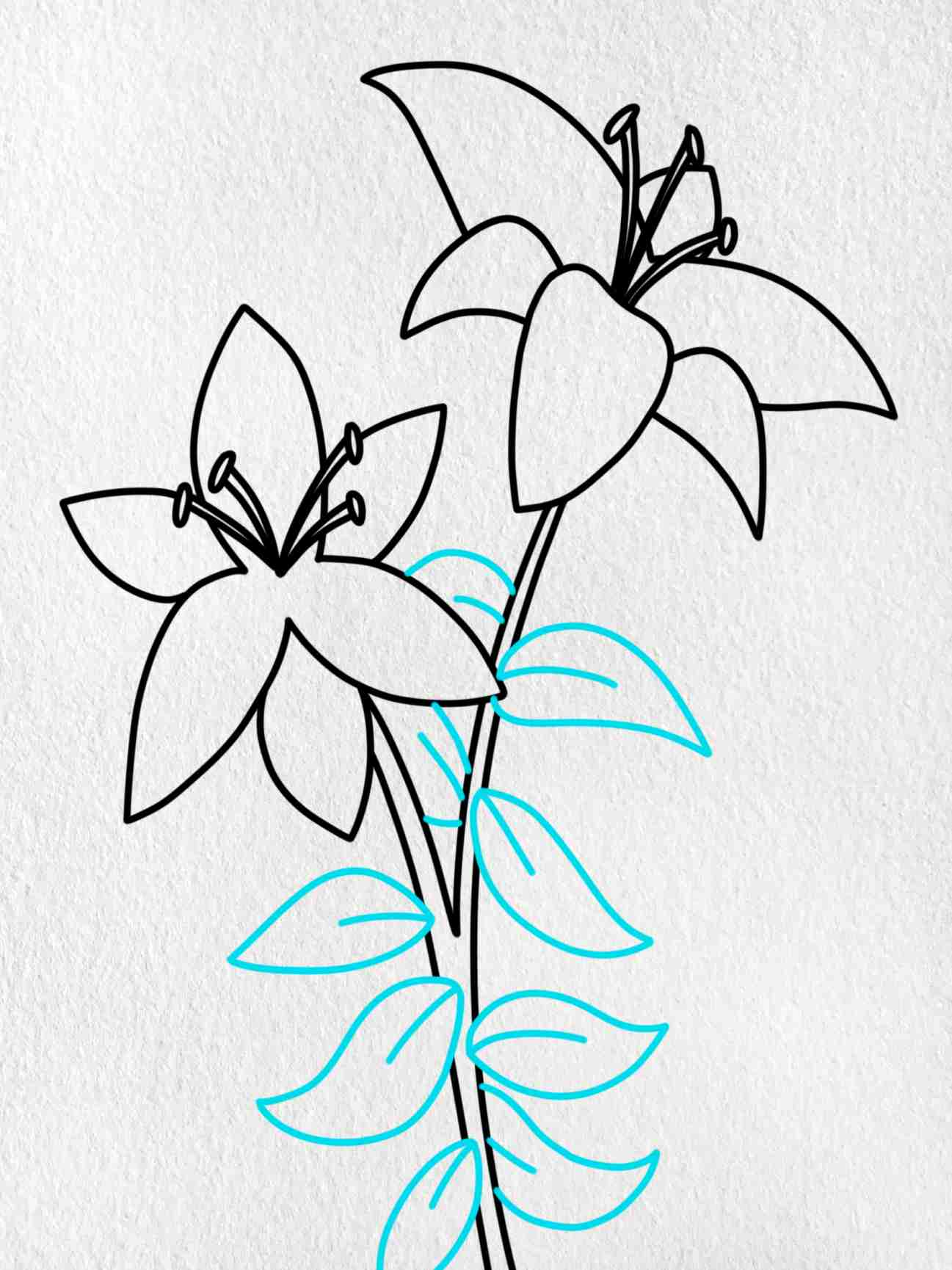 How To Draw A Lily: Step 8