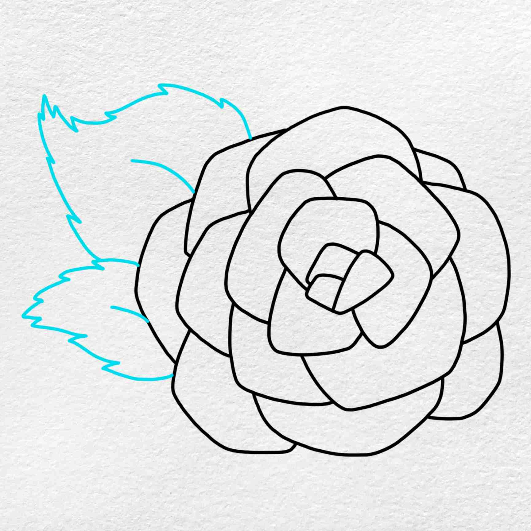 How To Draw A Rose For Beginners: Step 5