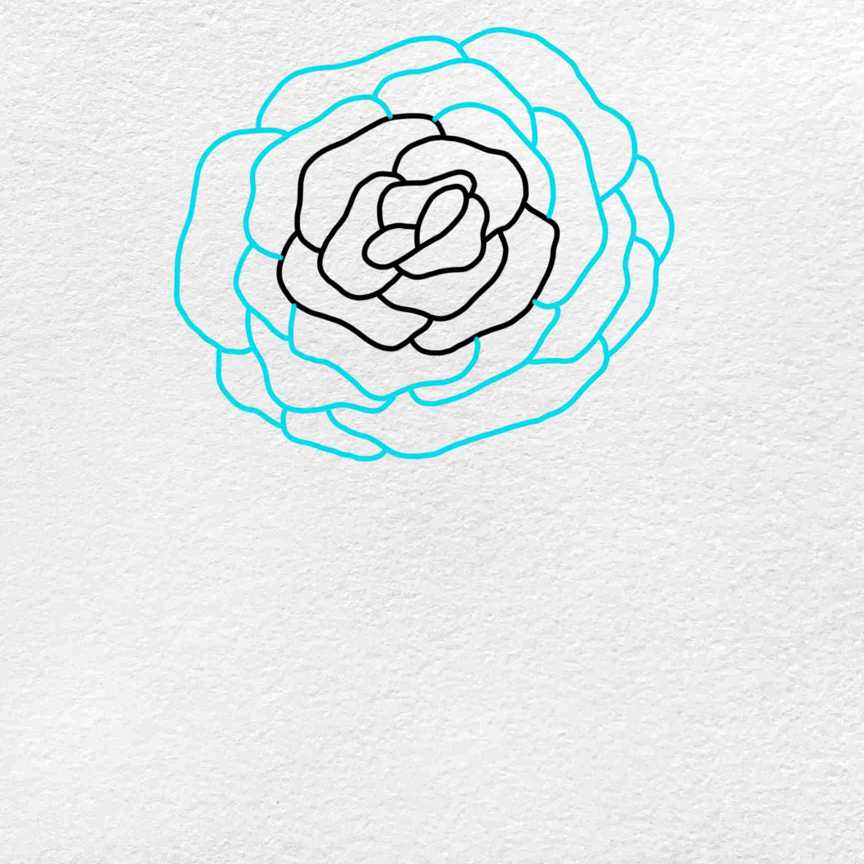 How To Draw A Rose Step By Step: Step 3