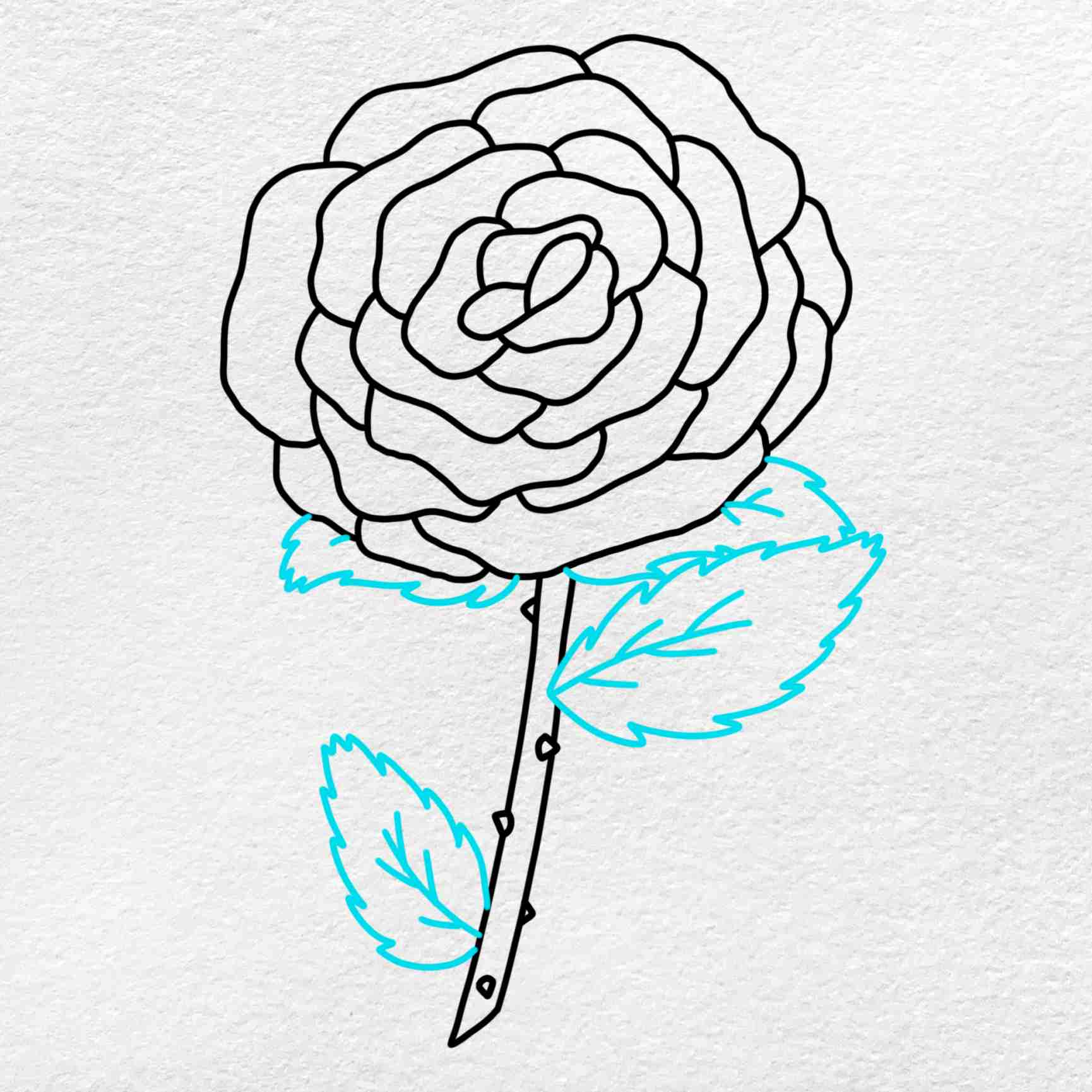 How To Draw A Rose Step By Step: Step 5