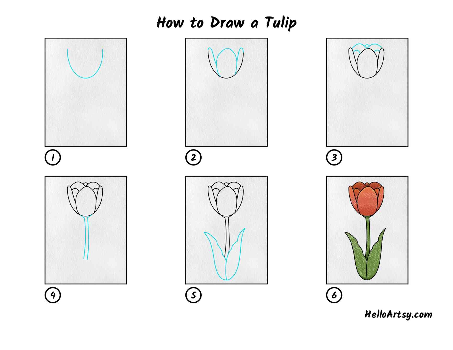 How To Draw A Tulip: All Steps