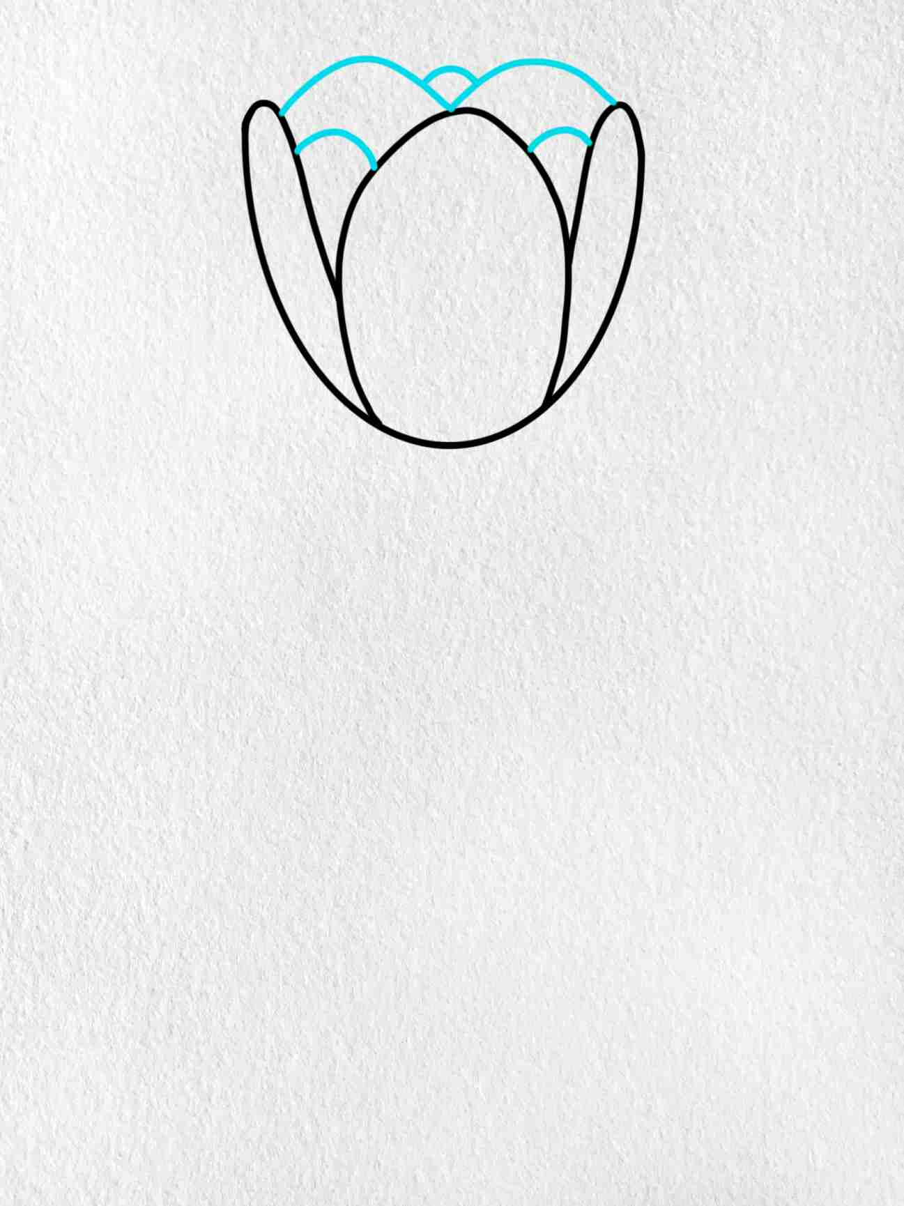 How To Draw A Tulip: Step 3
