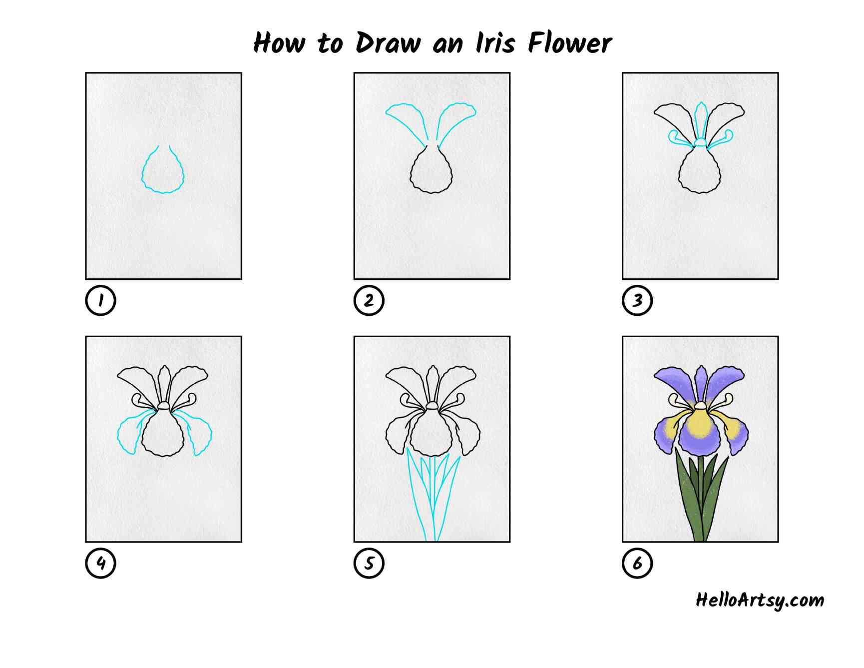 How To Draw An Iris Flower: All Steps