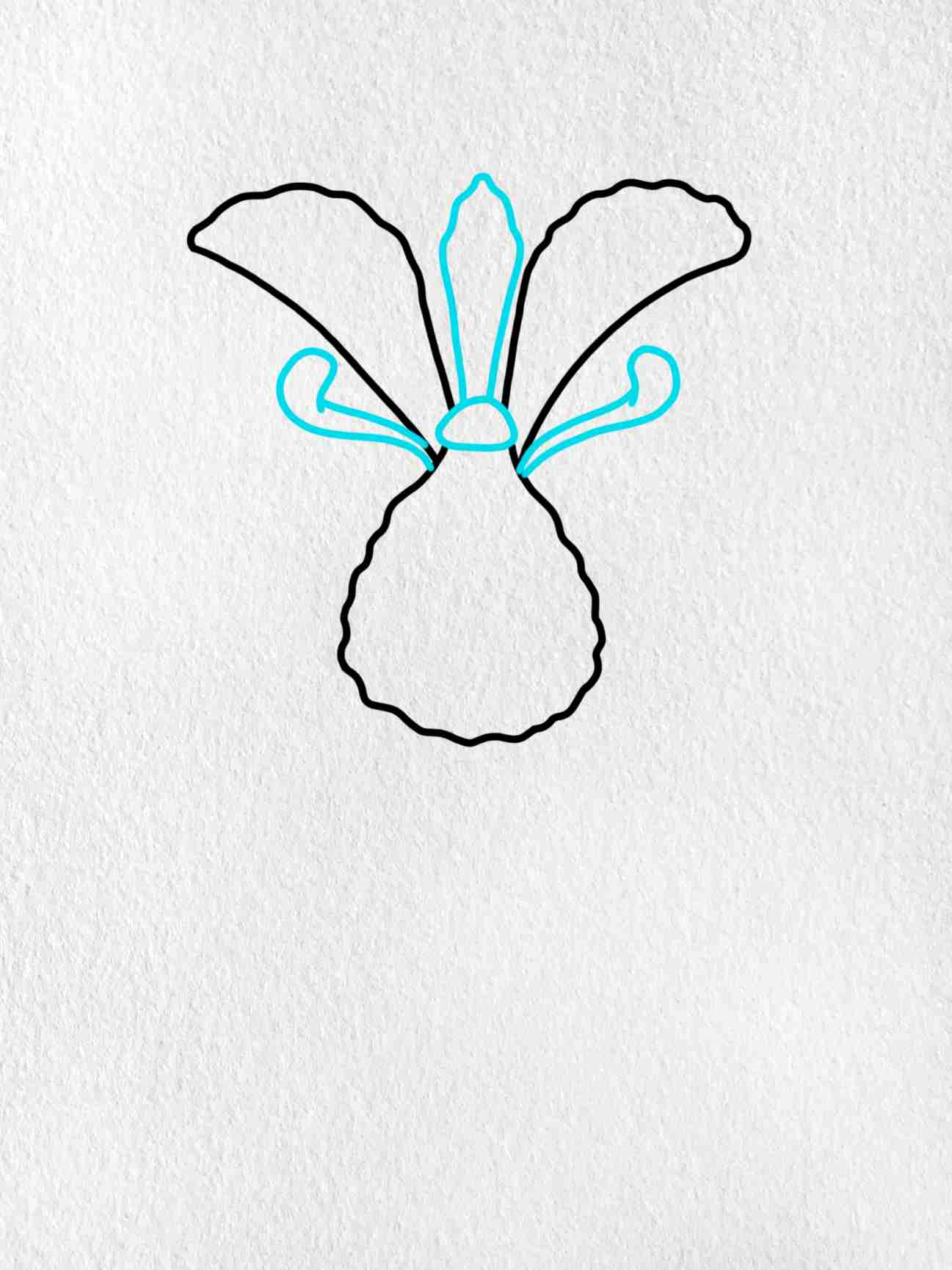 How To Draw An Iris Flower: Step 3