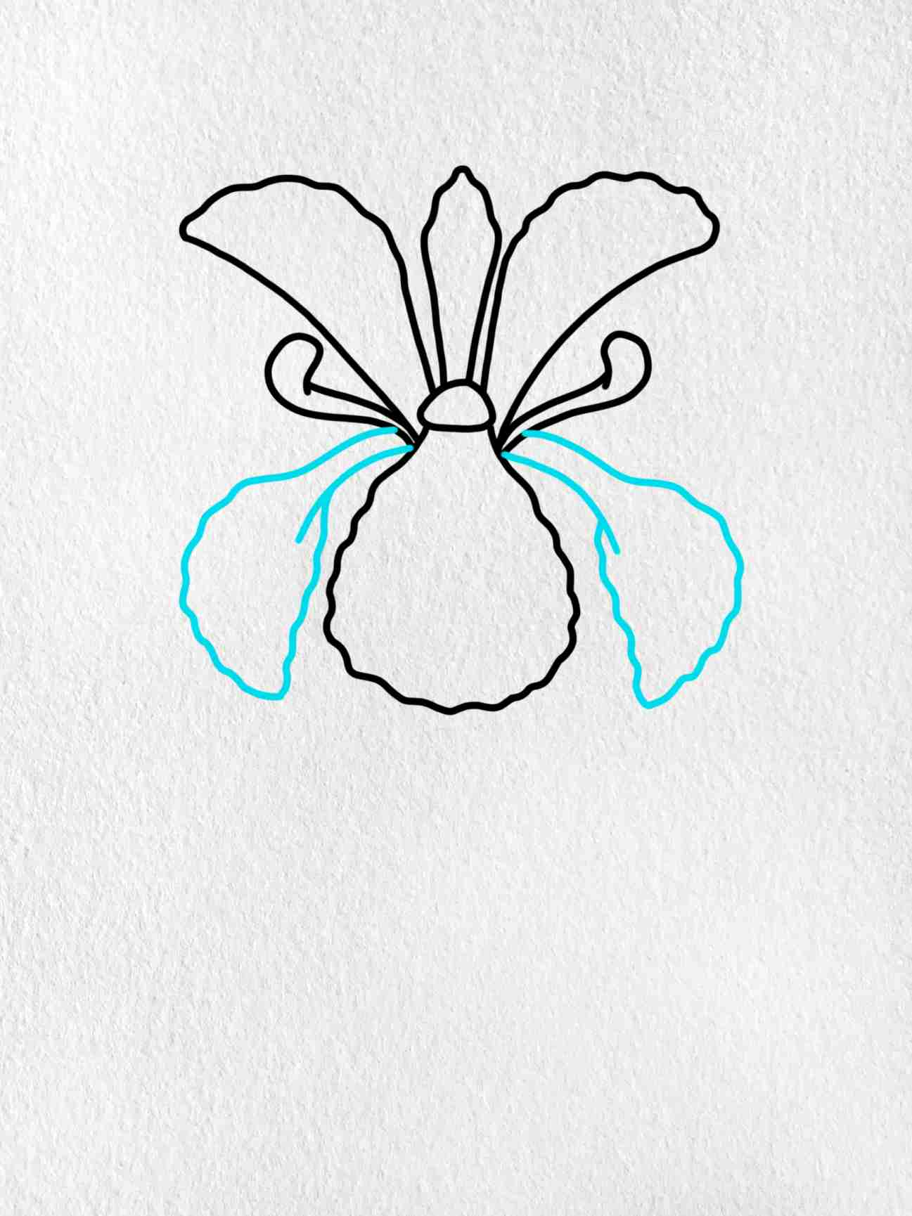 How To Draw An Iris Flower: Step 4