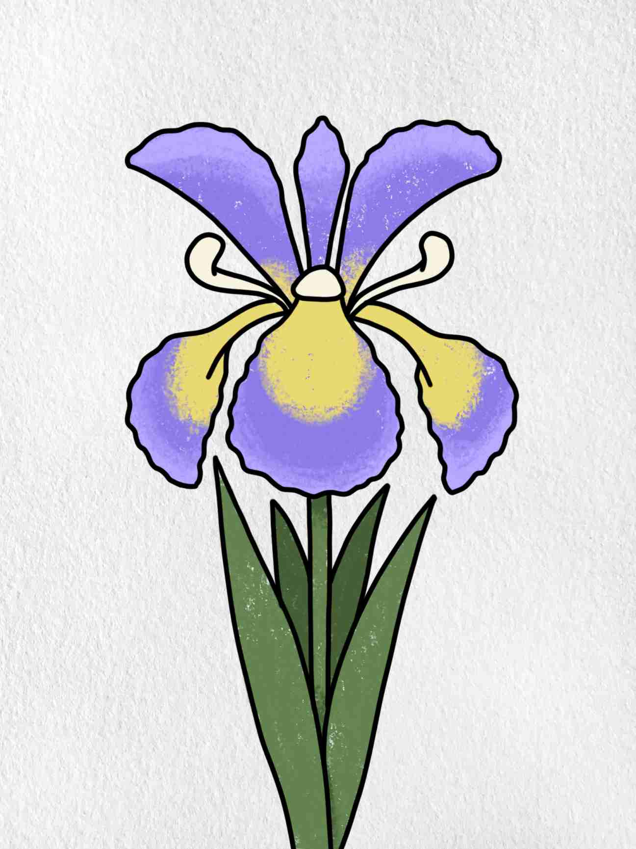 How To Draw An Iris Flower: Step 6