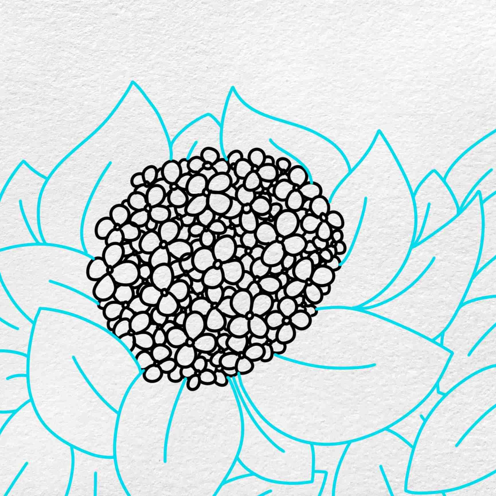 How To Draw Hydrangea: Step 5