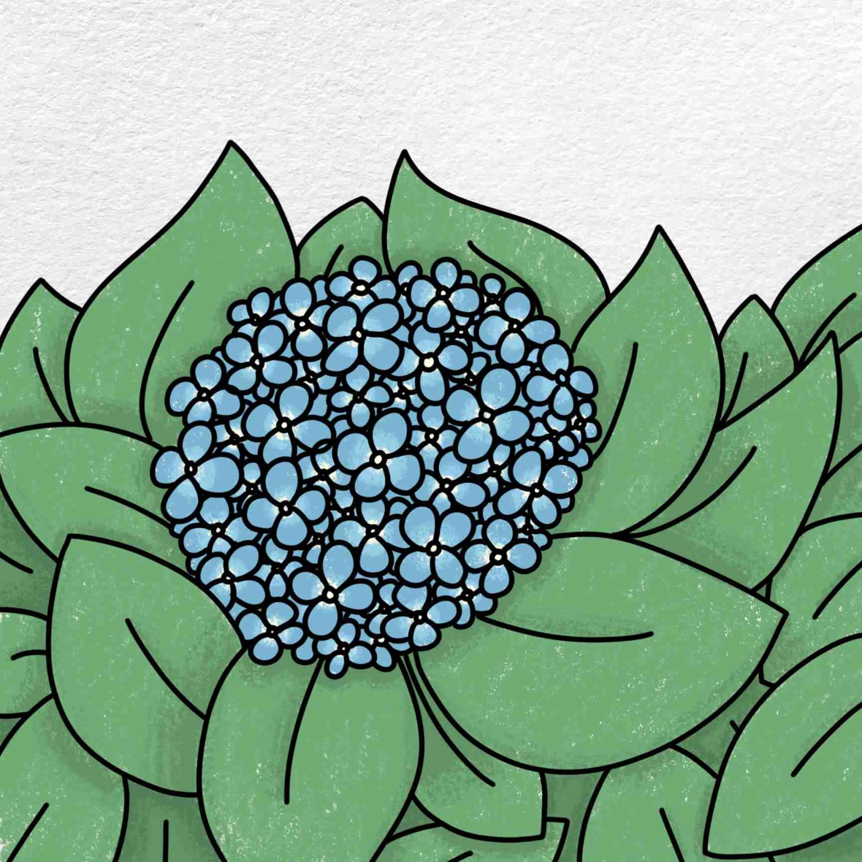 How To Draw Hydrangea: Step 6