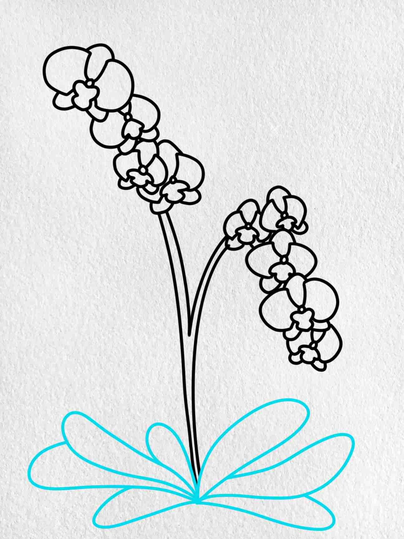 How To Draw Orchid: Step 8
