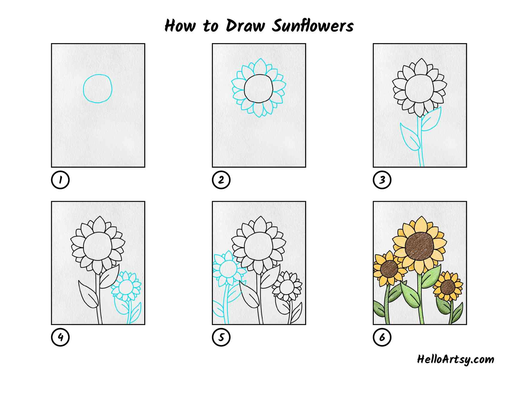 How To Draw Sunflowers: All Steps