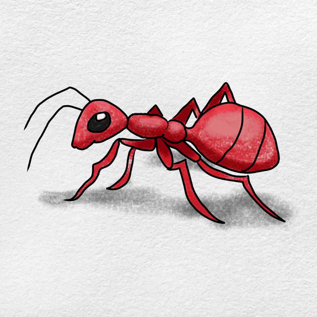 Ant Drawing: Step 6